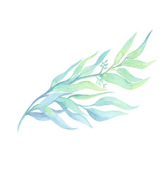 watercolor drawn green plant deocration on white vector image