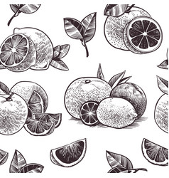 orange fruits seamless pattern vintage citrus vector image