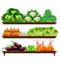 set of organic vegetable vector image