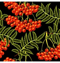 Red rowan berries seamless pattern Template for vector image vector image