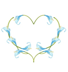 Beautiful blue anthurium flowers in heart shape vector