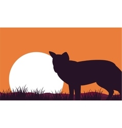 Fox at afternoon scenery silhouettes vector image