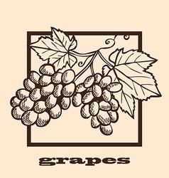 Hand drawn grapes vector