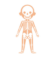boy body anatomy with skeleton system vector image vector image