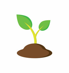 plant in the ground vector image vector image