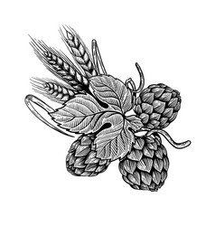hop and wheat in engraving style design element vector image