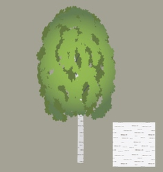 birch vector image