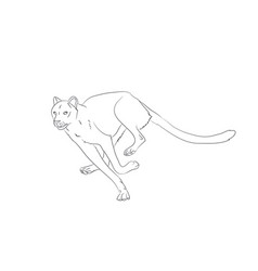 cheetah running drawing lines vector image