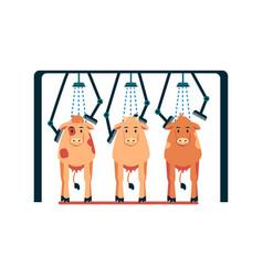 cow washing machine - cartoon cows standing under vector image