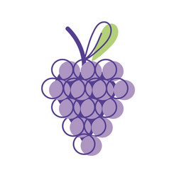 Delicious grape fruit with vitamins and protein vector