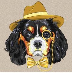 hipster dog breed King Charles Spaniel vector image