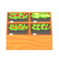 supermarket shelves with ruits and vegetables vector image