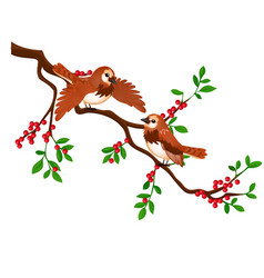 Two birds on a branch with red berries isolated vector