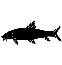 Silhouette of barbel vector image vector image
