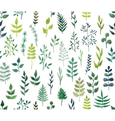 green watercolor floral seamless pattern vector image