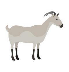 Farm pet goat vector