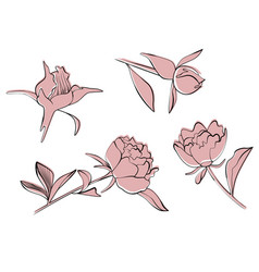 peony set doodle isolated vector image