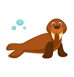 Walrus baby with long fangs and pair of flippers vector