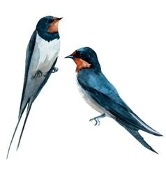 Watercolor swallow bird vector