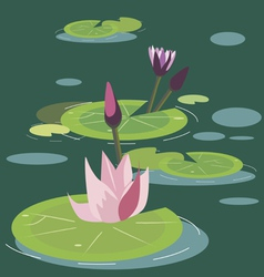 Blossoming lotuses vector