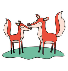 fox couple over grass in colorful silhouette on vector image