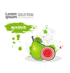 Guava hand drawn watercolor fruit on white vector