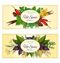 Hot spices seasonings spicy herbs banners vector image