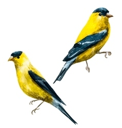 Watercolor american siskin bird vector image