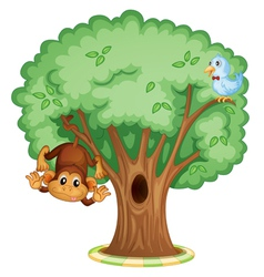Monkey in a tree vector image