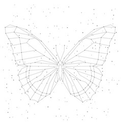 geometric linear butterfly constellation vector image