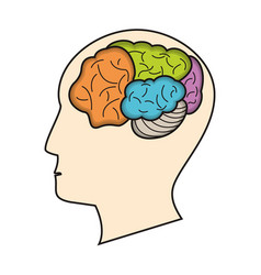 Profile head brain function vector