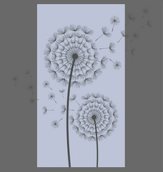 Two dandelion blowing on blue grey background vector