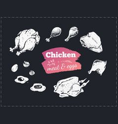 Hand drawn food poster chicken parts and eggs vector