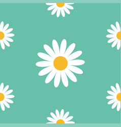 white daisy chamomile cute flower plant vector image