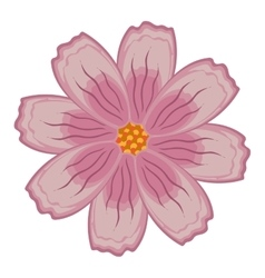 Colorful pink and purple flower graphic vector