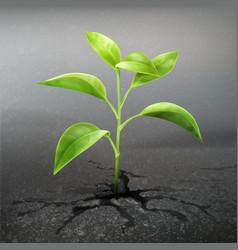 plant sprout through asphalt vector image