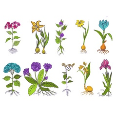 Set of Vintage Flowers - hand drawn vector image vector image