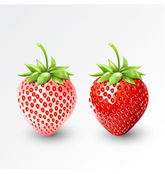 strawberry and white strawberry pineberry fruit vector image vector image