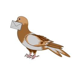 A pigeon with a letter on a white background vector image vector image