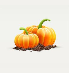 ripe pumpkin vegetables vector image vector image