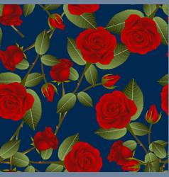 beautiful red rose - rosa on indigo blue vector image