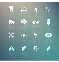 Body Icons set on Retina background vector image