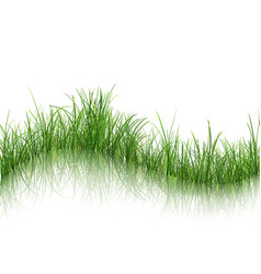grass with reflection on water vector image