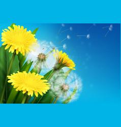 realistic dandelion vector image