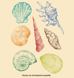 Set of isolated seashells vector