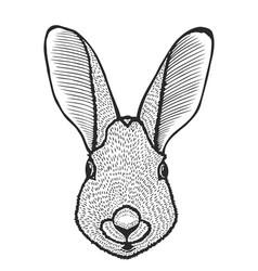 portrait of rabbit vector image