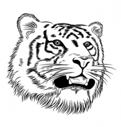 vector face of a tiger vector image