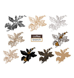 big set coffee branch 3 vector image