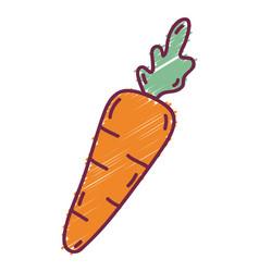 delicious fresh carrot organic vegetable vector image