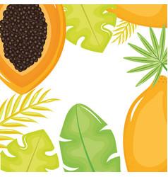 fresh papaya and leafs palm frame vector image